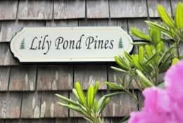 Lily Pond Pines