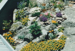 BHBPR_King's Rental_Rock Garden