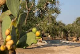 Apoikia - pool and olive trees - Specchia - Salento