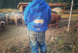 One of our little farm boys checking up on our pigs